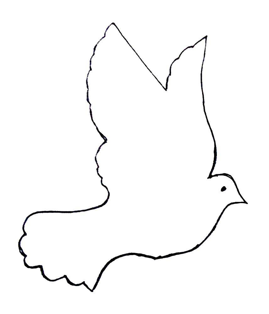Coloring Template of a dove Download the contours of birds, patterns, birds, dove.  Print ,The contours of birds,