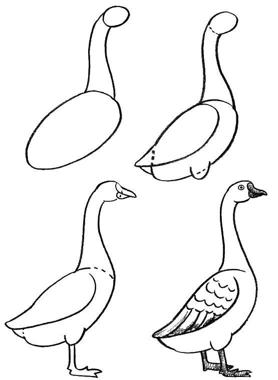 Coloring How to draw a goose Download how to draw a goose,.  Print