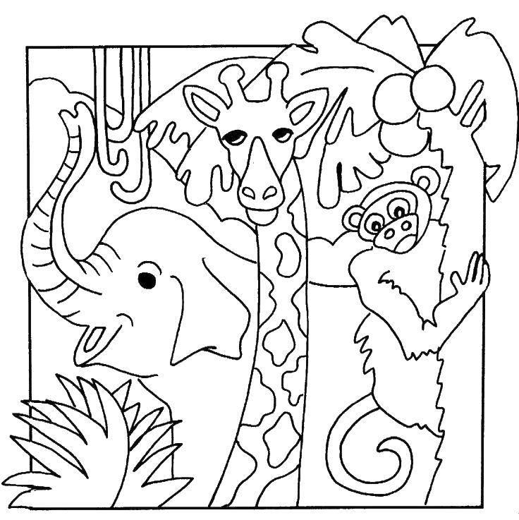 Coloring sheet coloring Download .  Print