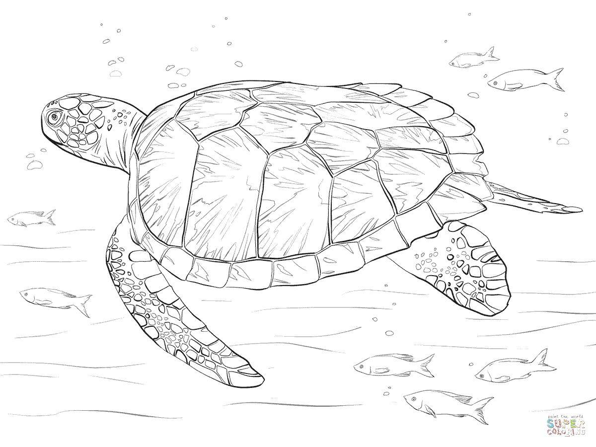 Coloring sheet sea turtle Download the month.  Print ,moon,