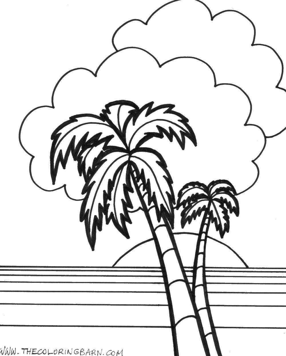 Coloring Sunset, palm trees Download ,Sun, rays, joy,.  Print