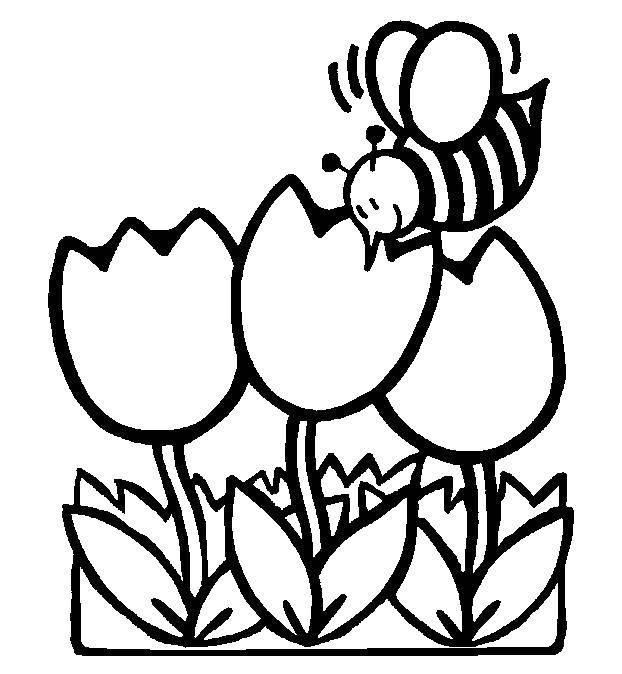 Раскраски ромашка, Раскраска Ромашка Цветы.