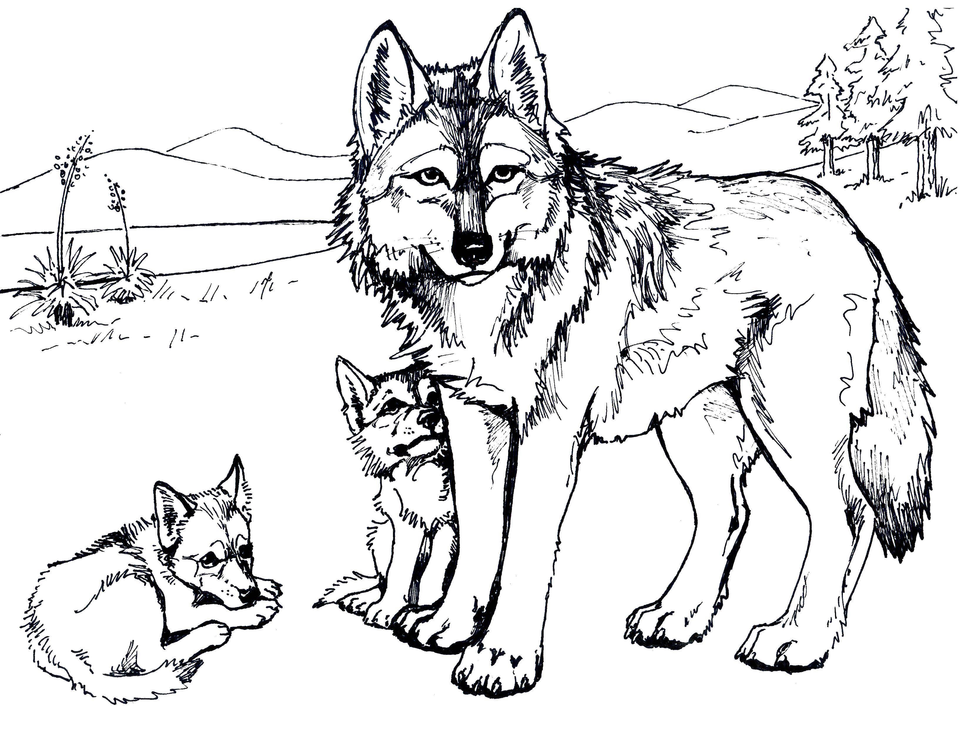 картинки для раскраски волка методологии