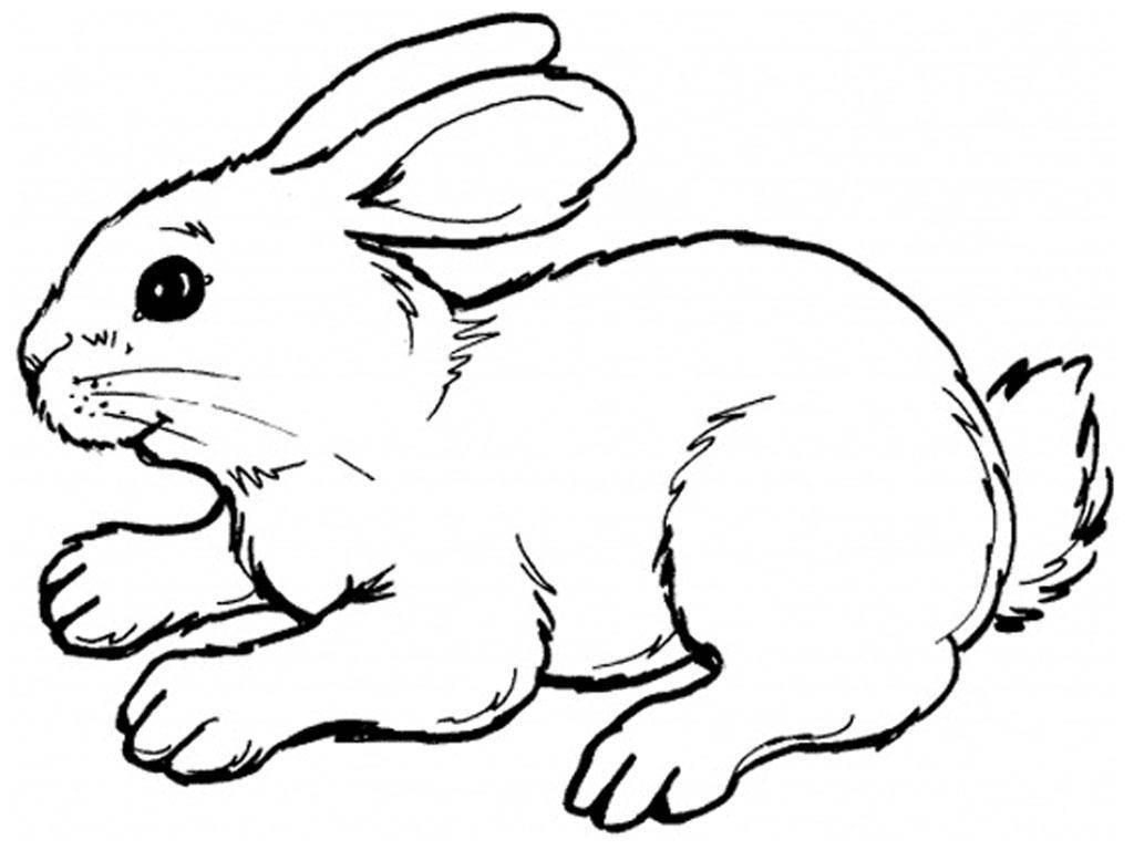 Раскраска Рисунок зайца Скачать ,заяц,кролик,.  Распечатать