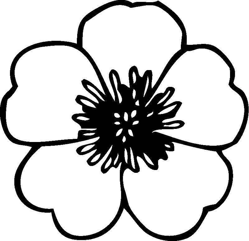Раскраска Мак Скачать ,цветы, маки,.  Распечатать