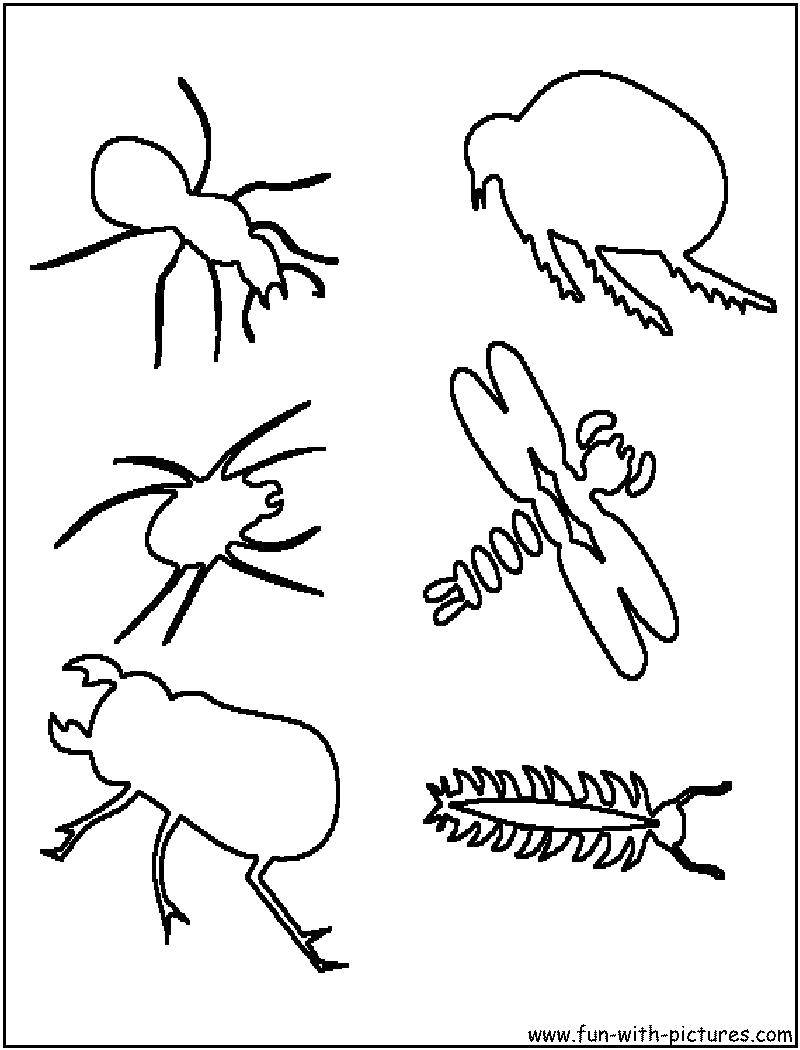 Coloring sheet Insects Download .  Print