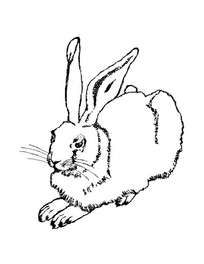 Картинки кроликов для раскрашивания