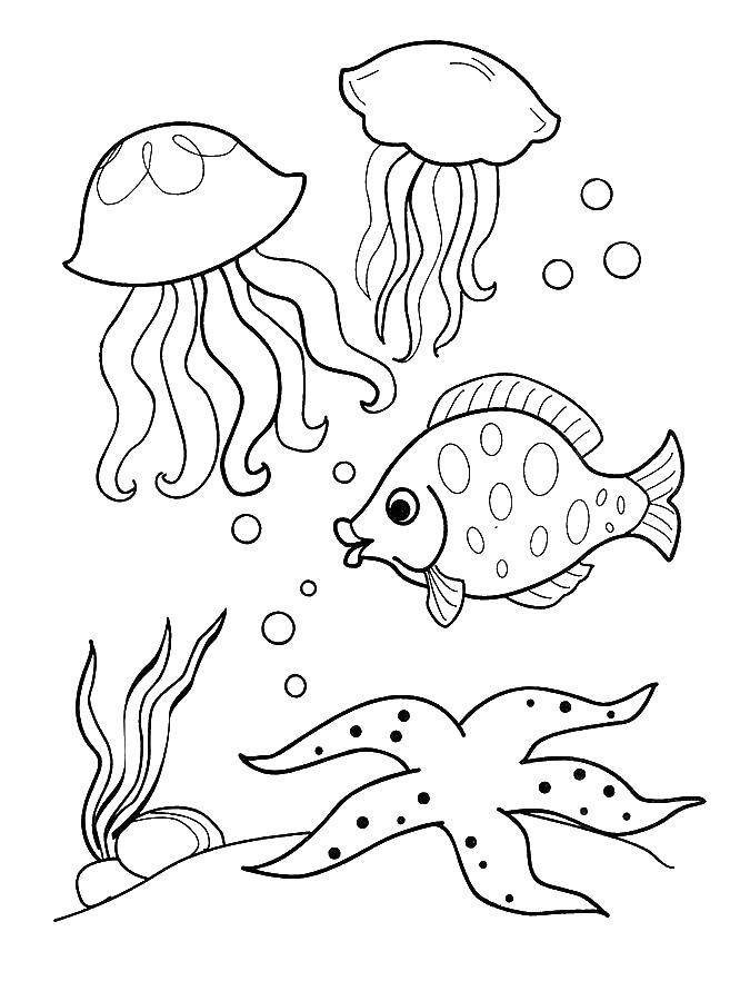 Coloring sheet fish Download ,professions, waiter,.  Print