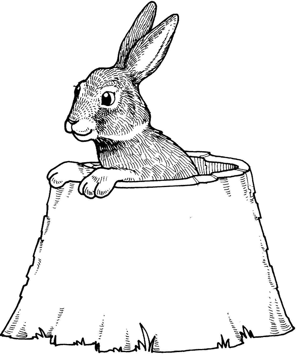 серый заяц картинка для раскрашивания детишки