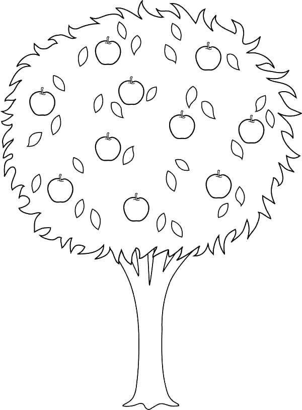 Раскраски голые, Раскраска Голые ветки дерево.