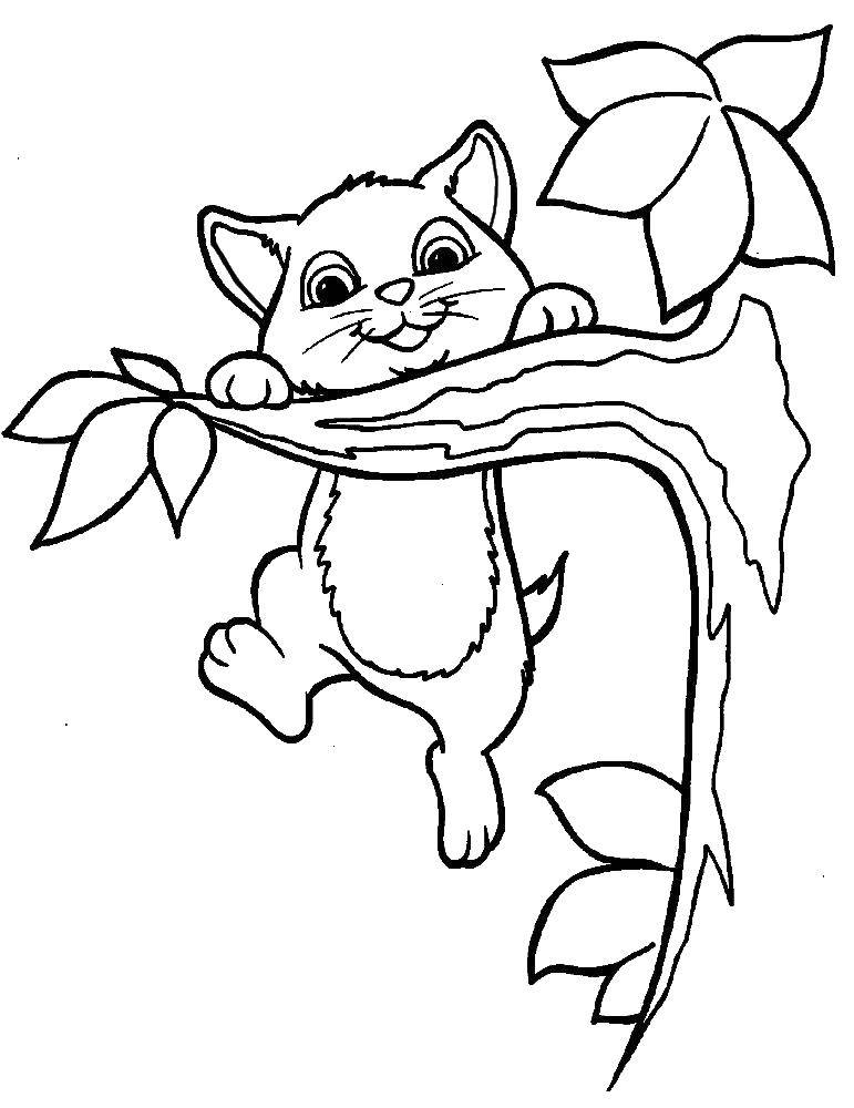 Coloring Kitty on the branch. Category The cat. Tags:  cat, cat, branch, animal.