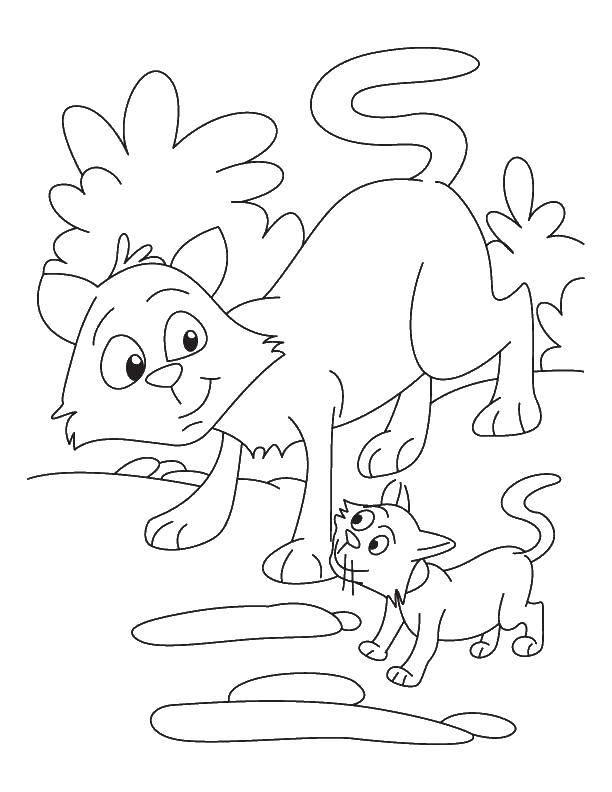 Раскраски два, Раскраска Два милых котенка Коты и котята.