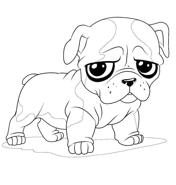 Раскраски кистью, Раскраска Собака с кистью и ошейником ...