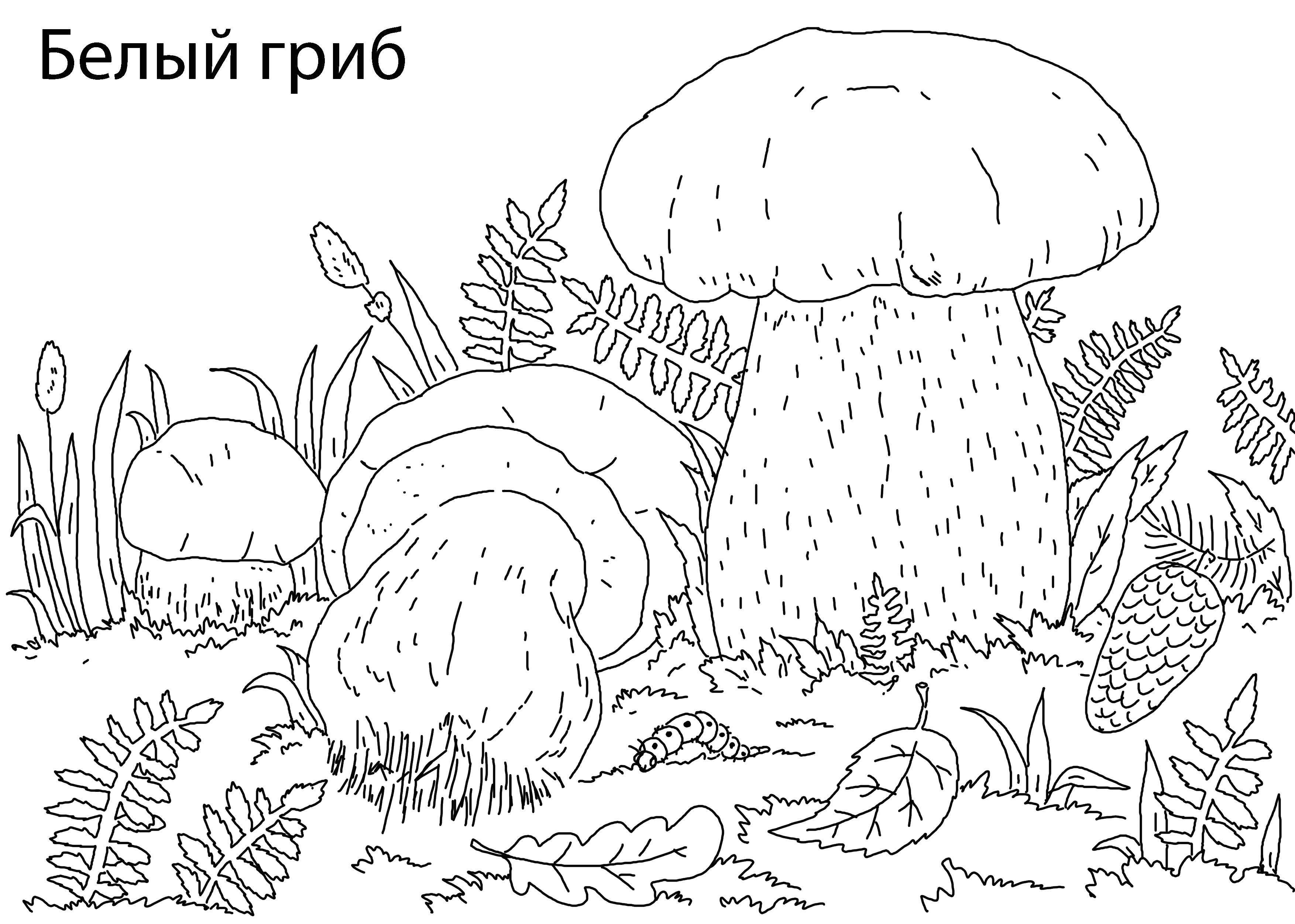 советской раскраска на тему лес грибы ягоды полиция его