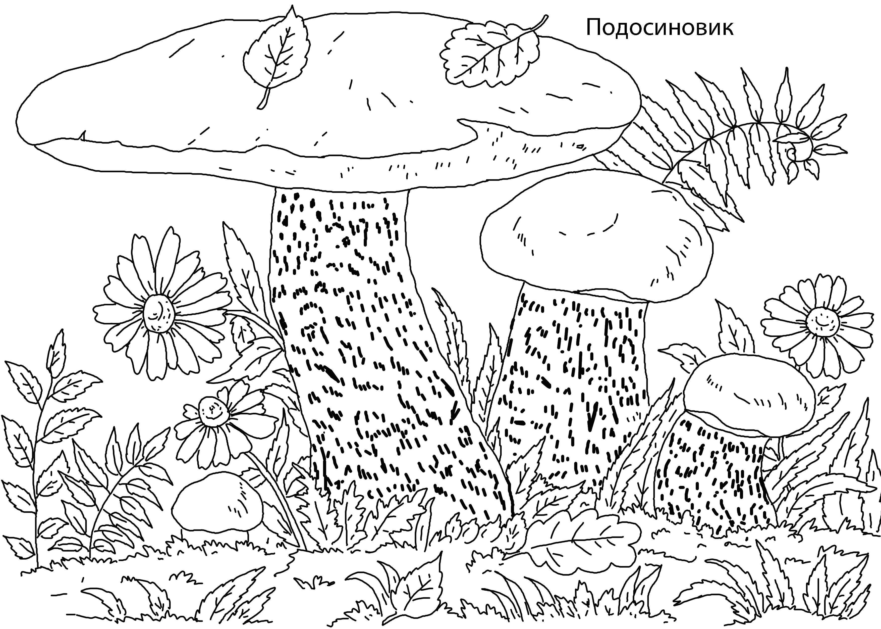 Раскраска с названием грибов