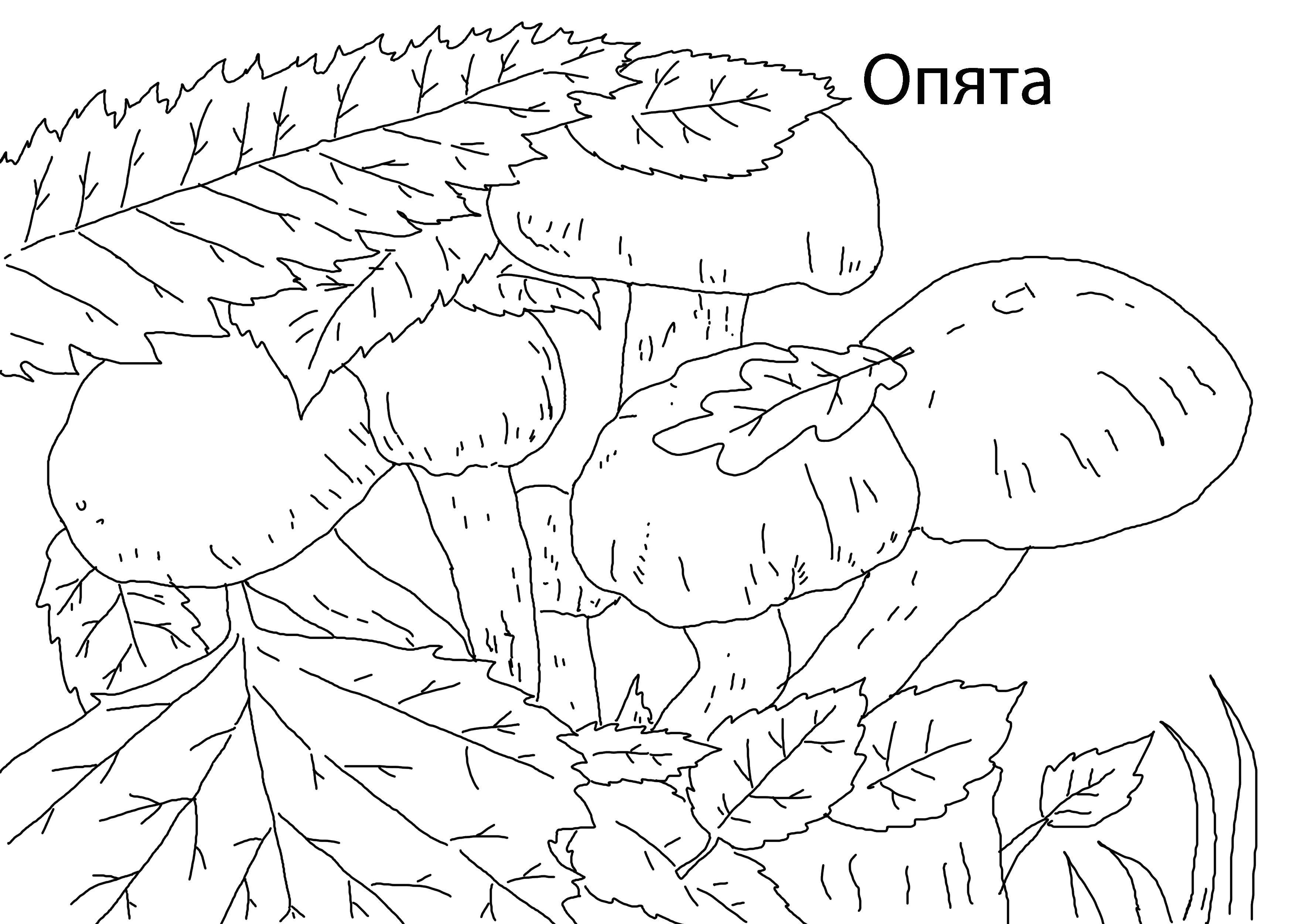 картинки раскраски с грибами распечатать
