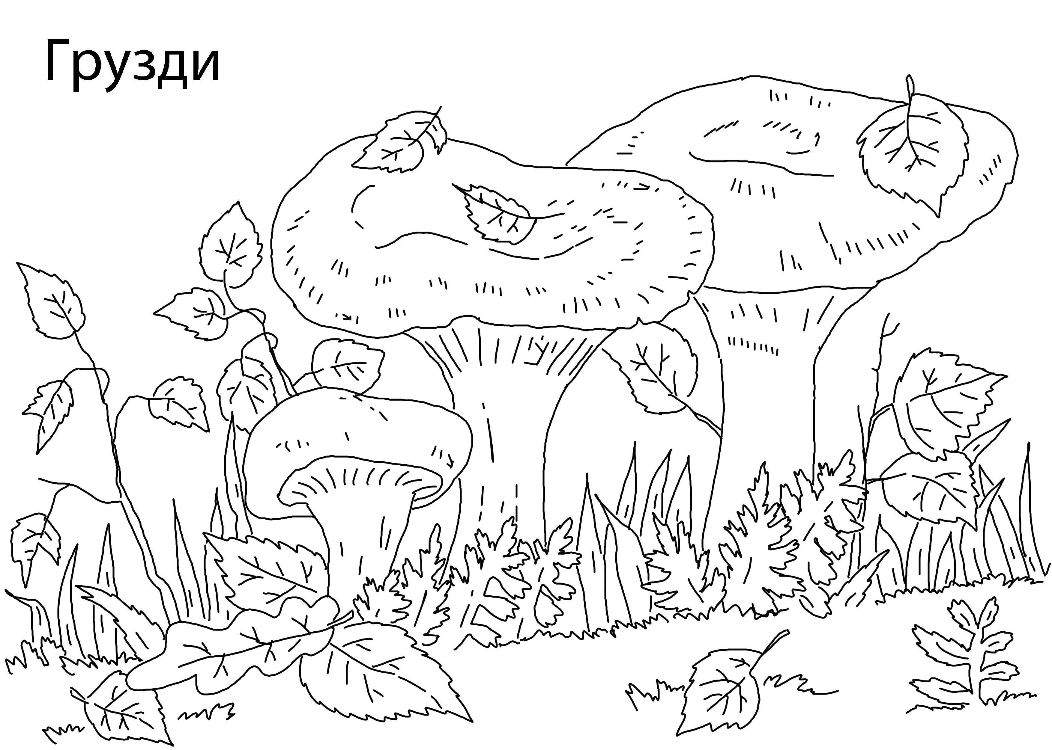 Раскраски моховик, Раскраска Гриб моховик грибы.