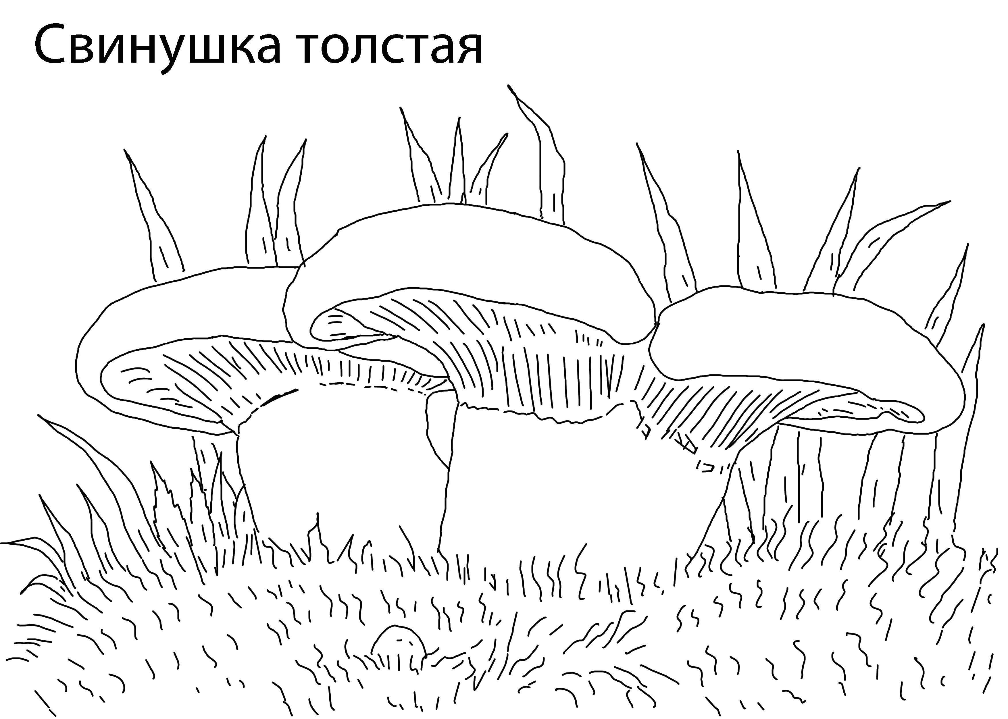 Раскраски Раскраска Грибы опята грибы, скачать распечатать ...