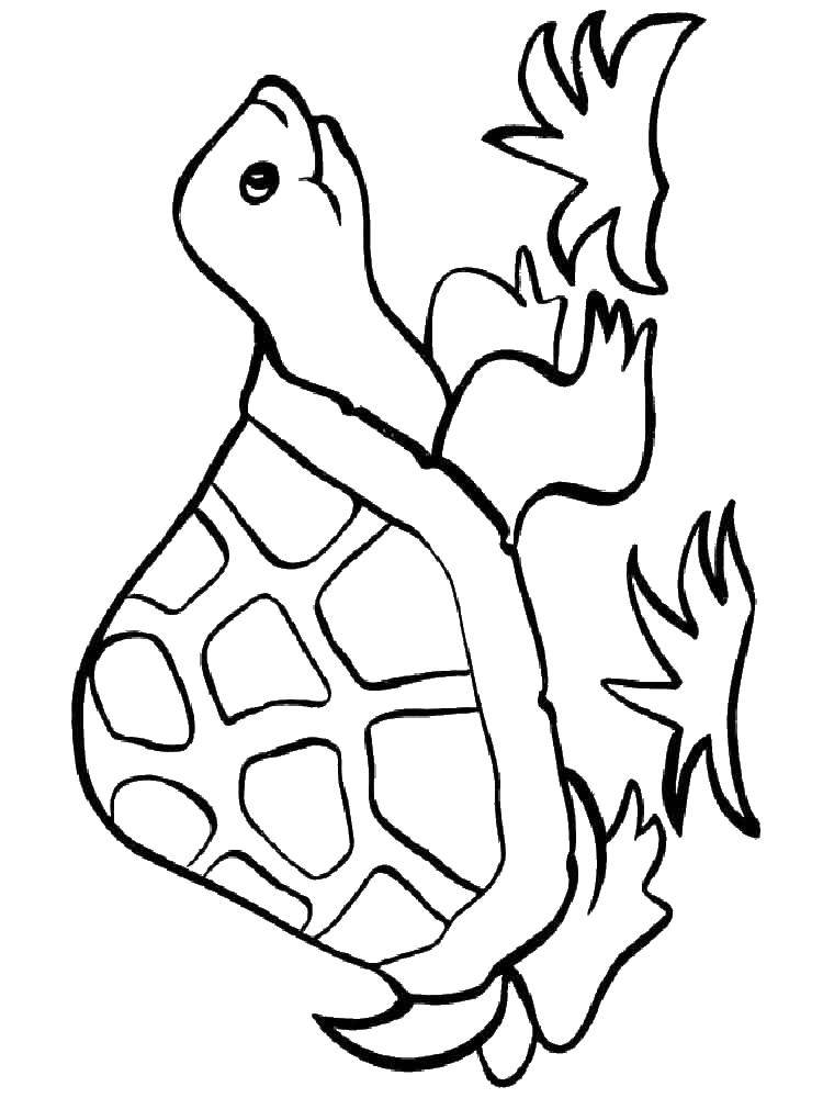 Coloring sheet turtle Download .  Print