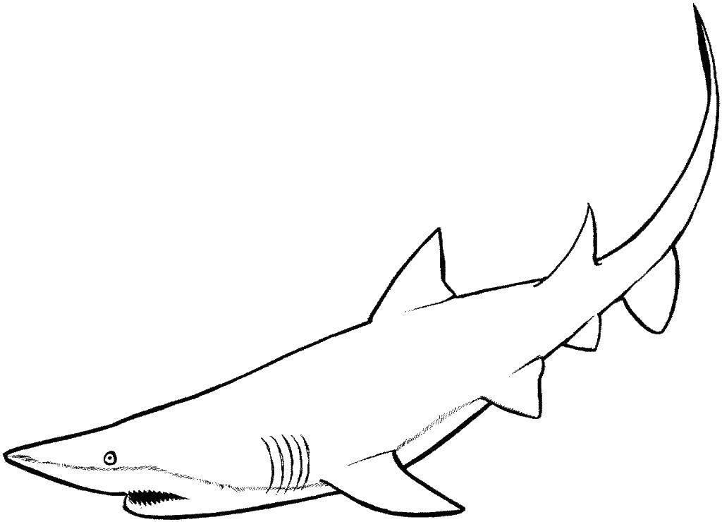 семейная белая акула картинки для раскрашивания различным хвостикам, ушкам