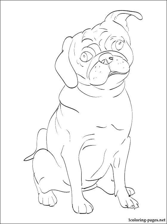 Coloring sheet dogs Download .  Print