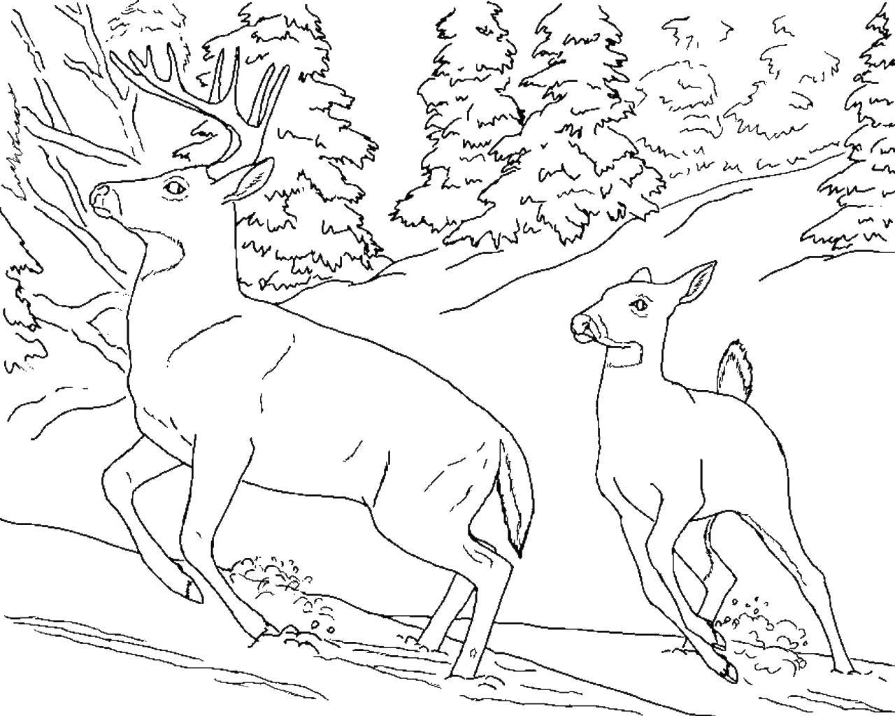 Coloring Deer in the mountains Download animals, deer, winter, snow, mountains.  Print ,Animals,