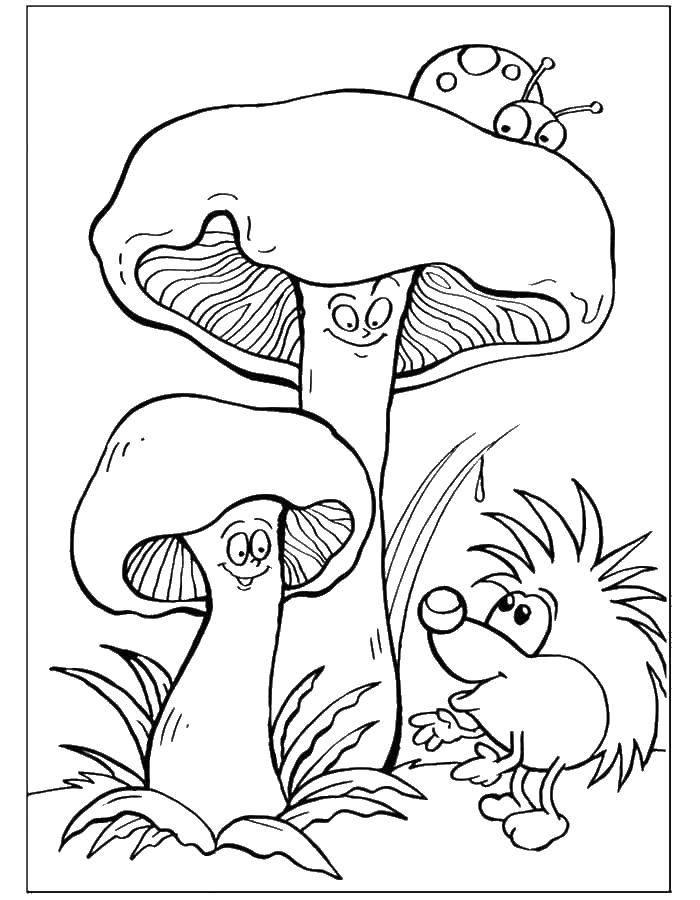 Раскраски Раскраска Ежик под грибами Животные, скачать ...