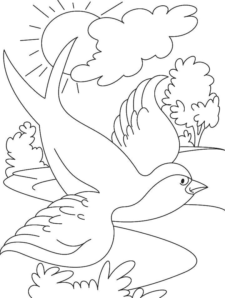Coloring Swallow in nature Download Birds.  Print ,birds,