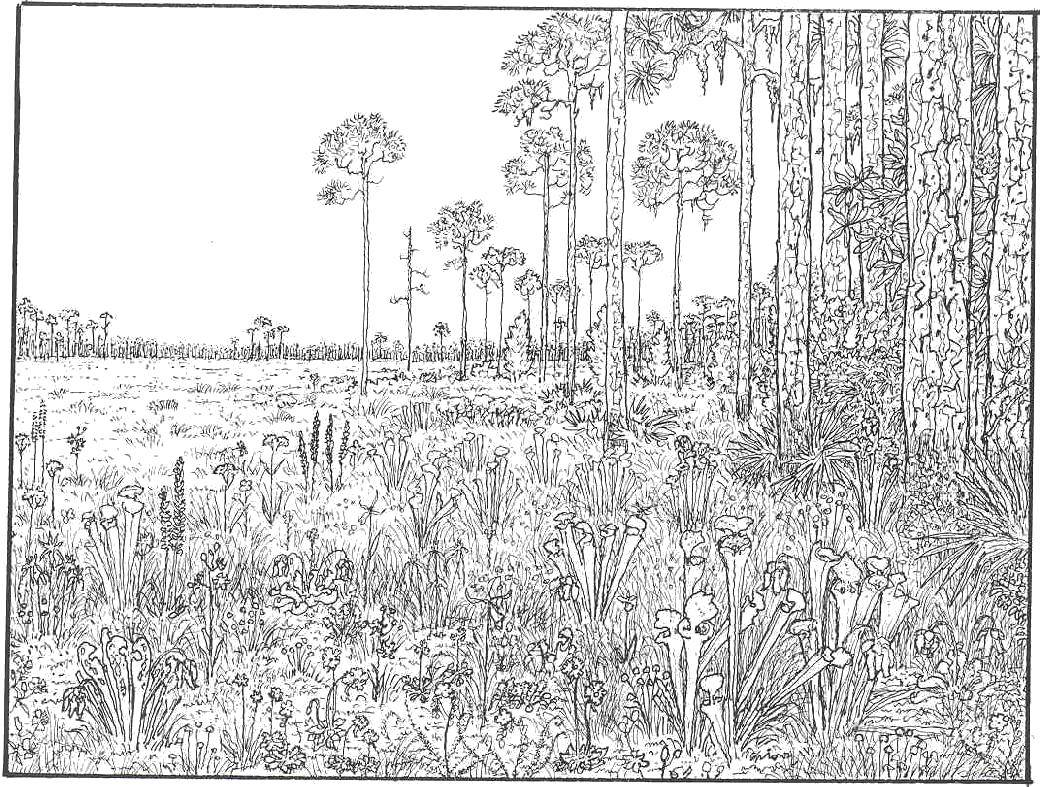 Coloring sheet forest Download .  Print