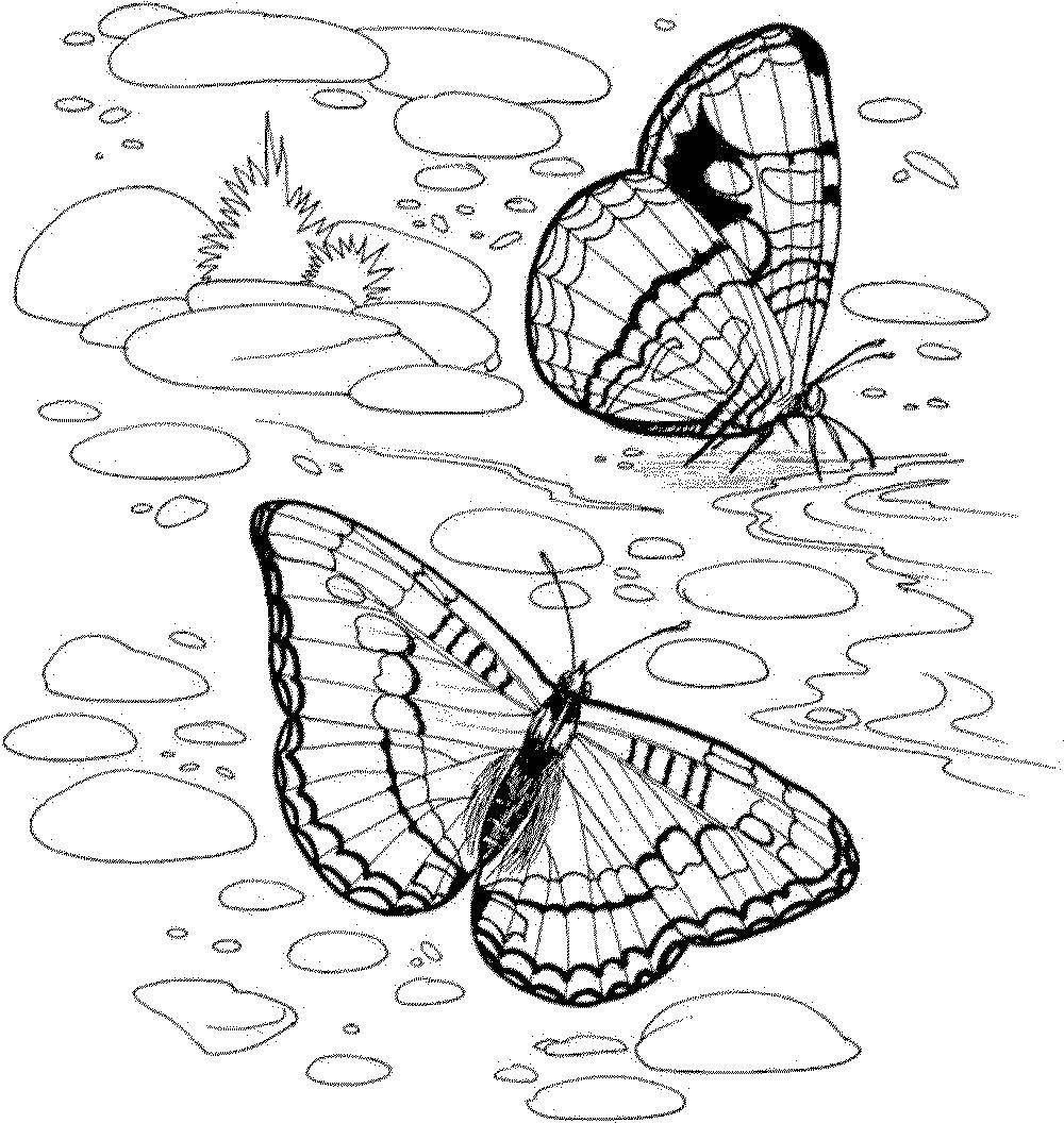 монарх раскраска животные птицы насекомые рыбы собственно