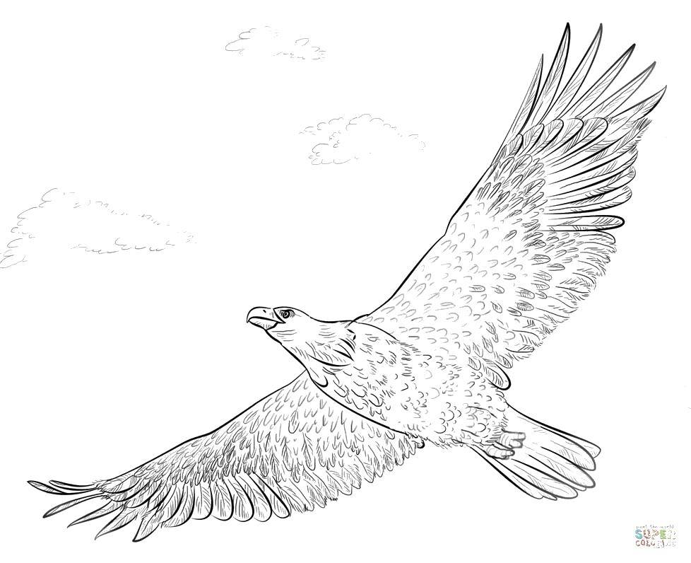 раскраска орел в полете доступны различные кремниевых