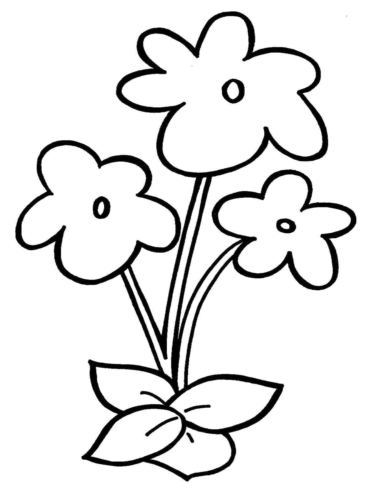 Картинка с цветком раскраска