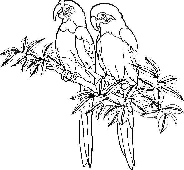 Coloring sheet birds Download basket, flowers.  Print ,flowers,
