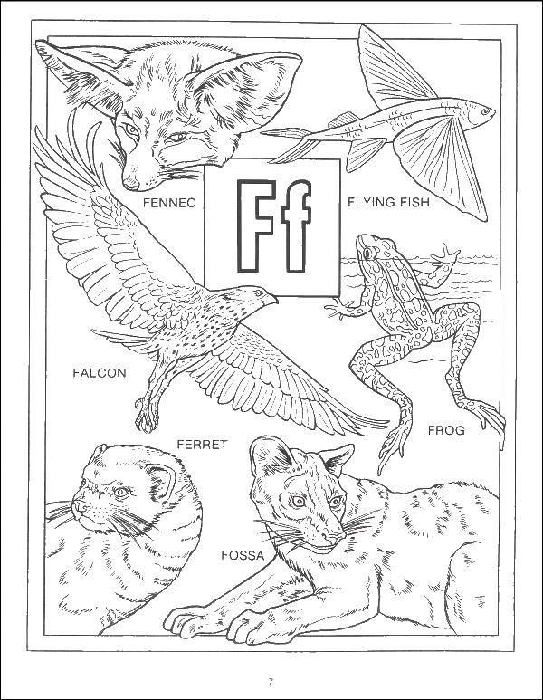 Coloring sheet English alphabet Download Autumn, leaves.  Print ,autumn,