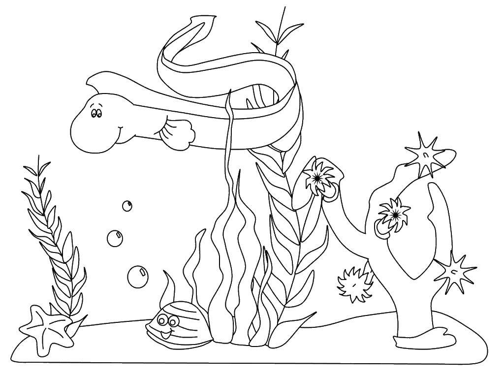 Coloring sheet sea Download .  Print