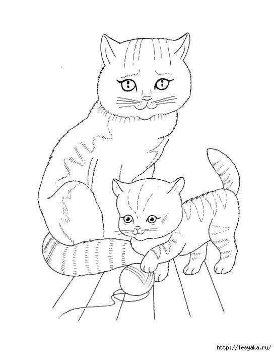 Coloring sheet Cats and kittens Download .  Print