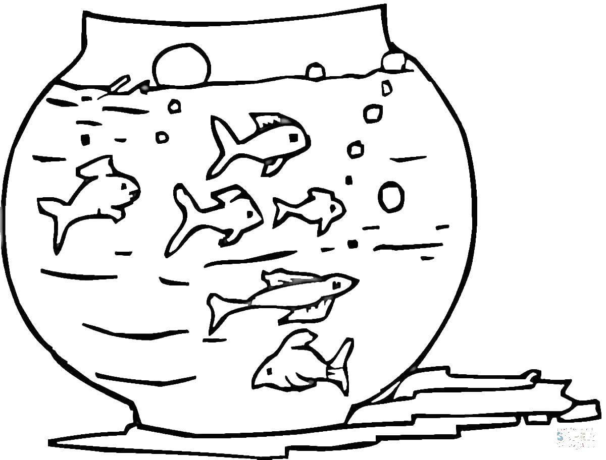 рыбки в аквариуме картинки распечатать проходящих