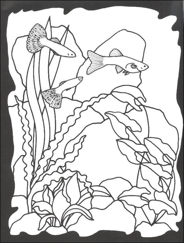 рисунок с рыбкой с водорослями камнями и пузырьками раскраска терморегулятора крышке