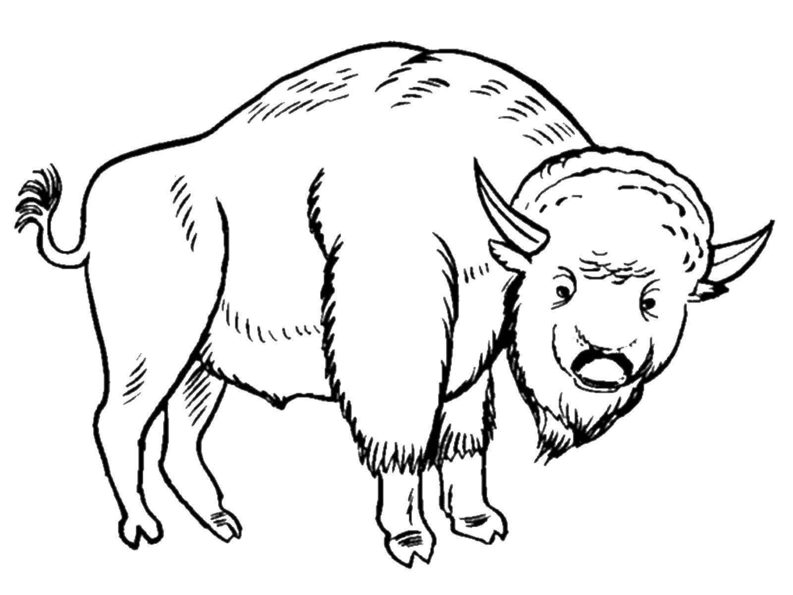 Coloring sheet Animals Download ,cartoons, children,.  Print