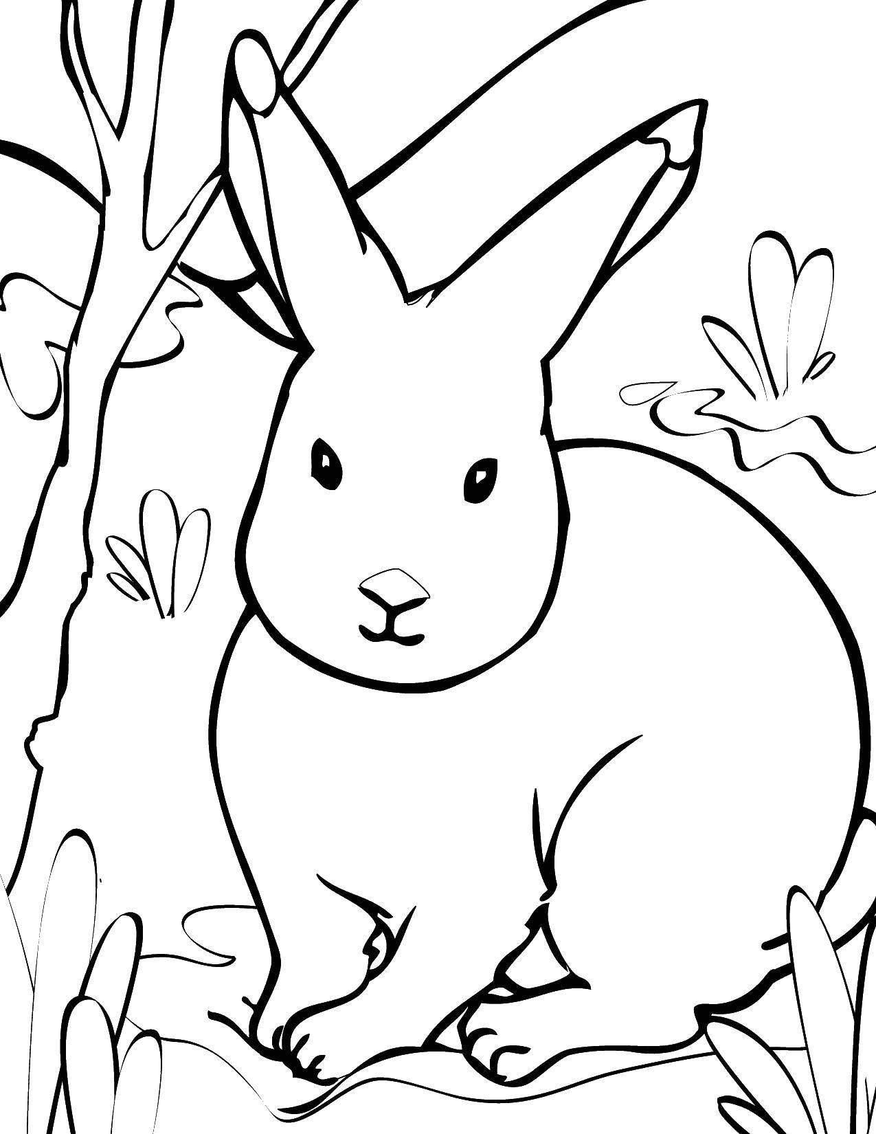 Coloring sheet Animals Download monitor, printer, speakers.  Print ,coloring,