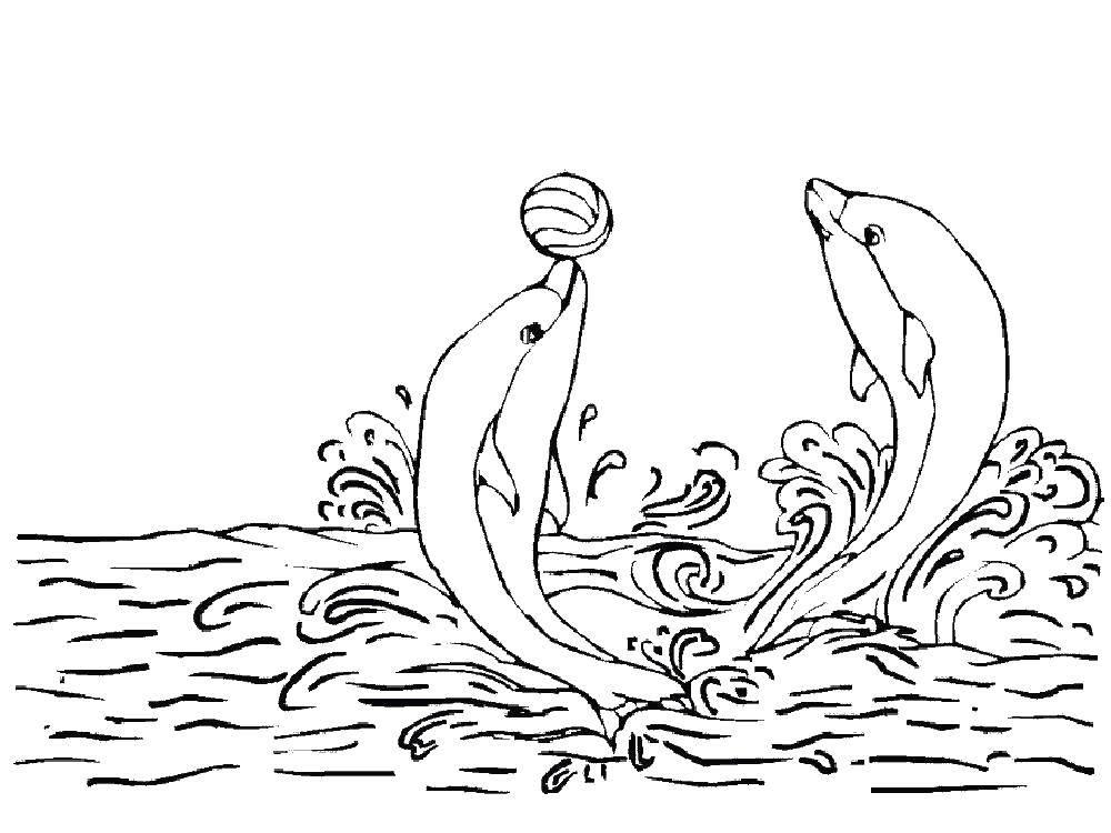 дельфин с мячом раскраска