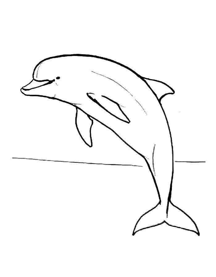 Раскраска дельфин Скачать ,контур, дельфин,.  Распечатать