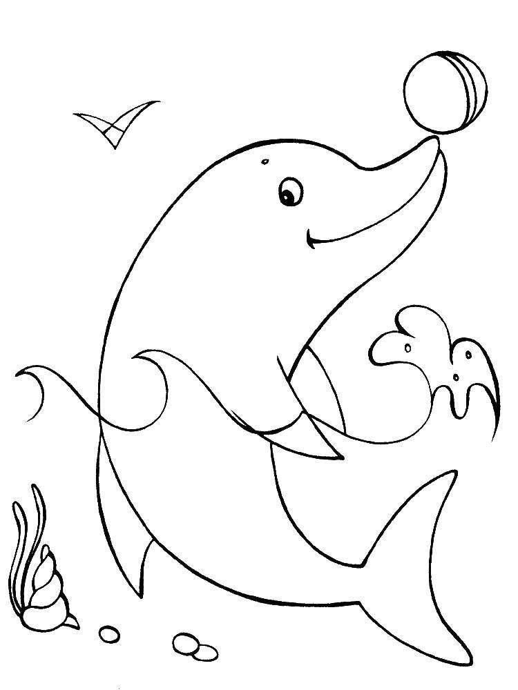 Раскраски капли, Раскраска Дельфин и капли воды дельфин.