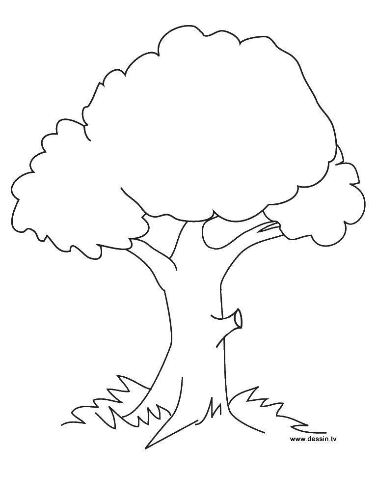Раскраски дерева, Раскраска Осеннее дерево Контур дерева.