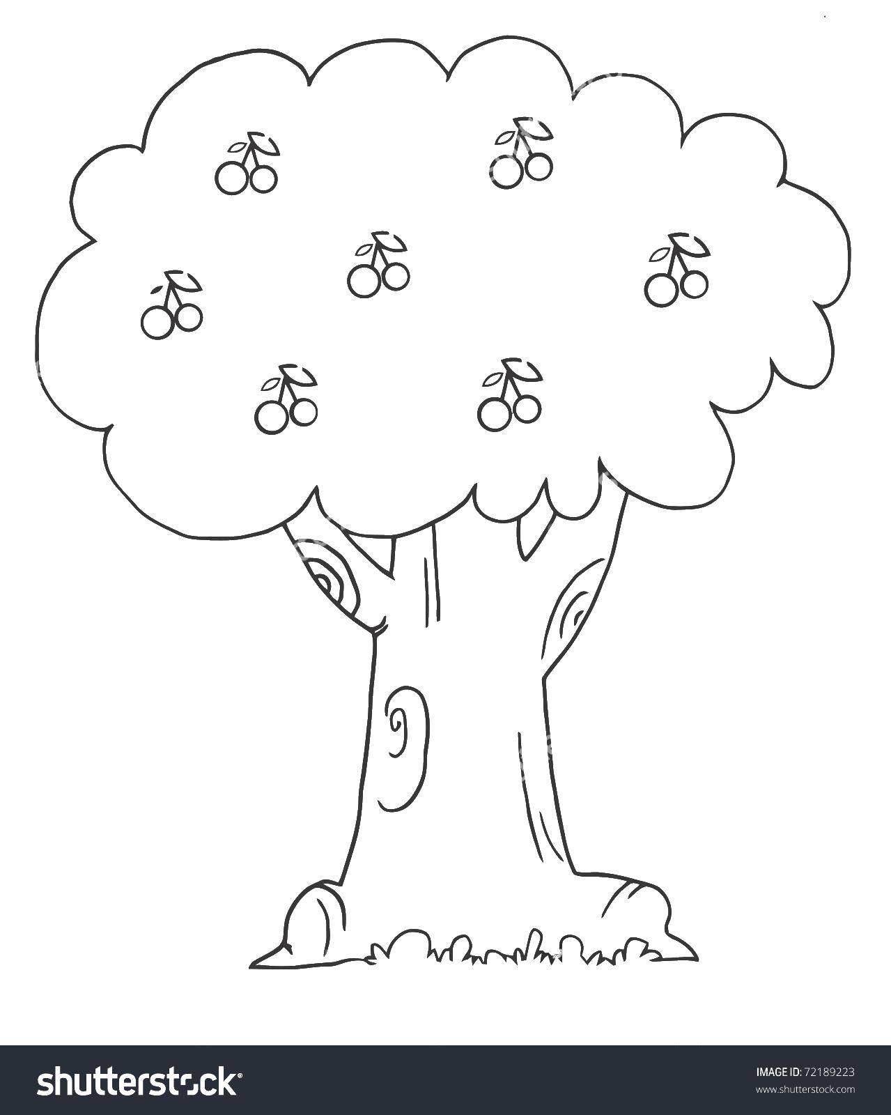 Раскраски Раскраска Высохщие деревья Контур дерева