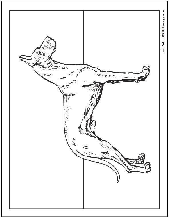 Раскраски будки, Раскраска Собака у будки Собака и будка.