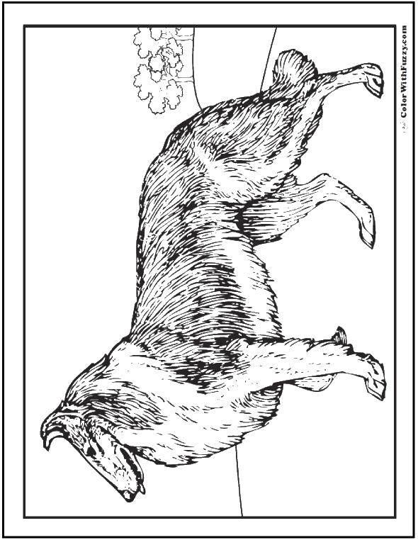 Раскраски будка, Раскраска Собака у будки Собака и будка.