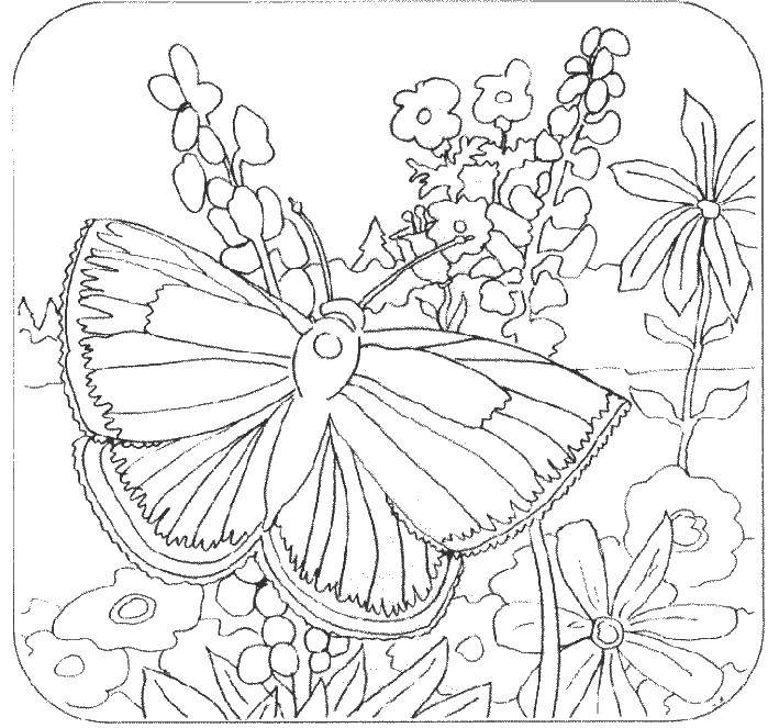 Coloring Butterfly in nature Download nature, butterfly, flowers.  Print ,Nature,