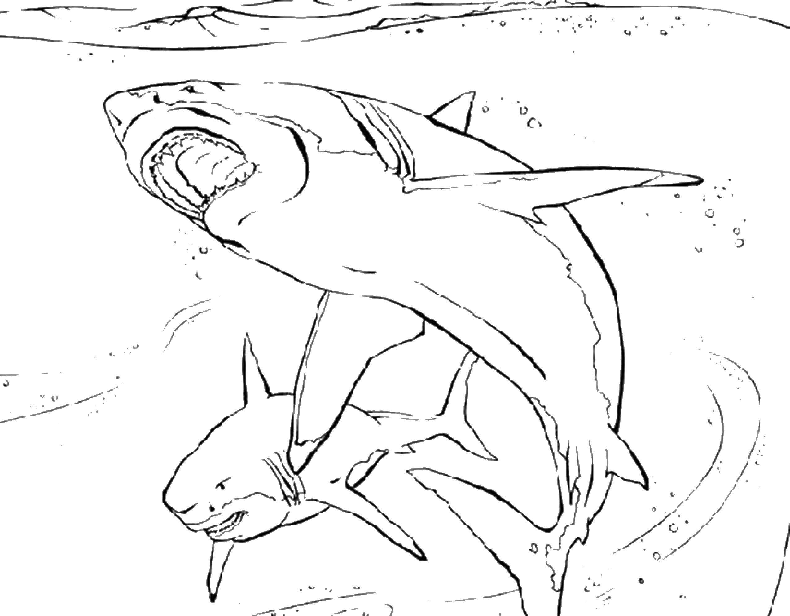 для того акула толстого раскраска корнишоны