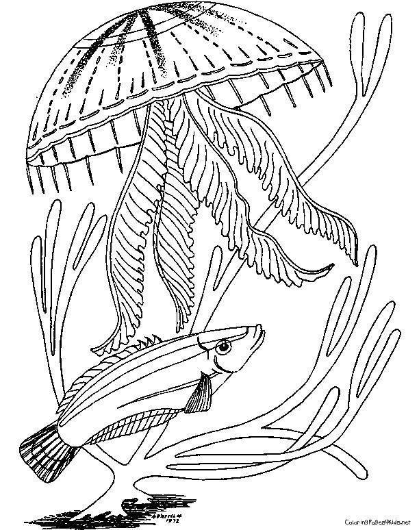 раскраска медузы под водой никогда евреи